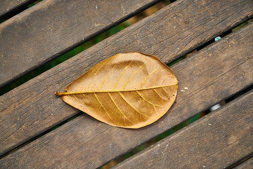 Leaves, Macro, Autumn, Single, Wood-fibre Boards