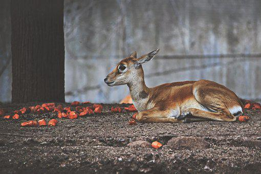 Cute Deer, Deer, Wildlife, Young, Animal
