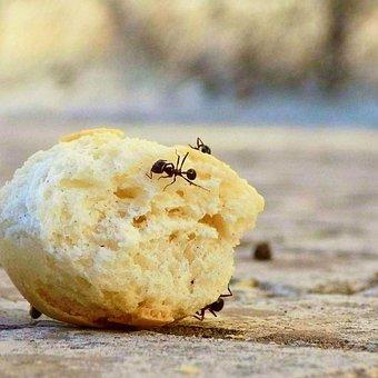 Animals, Ants, Work, Bread Macro, Small, Ant Animal