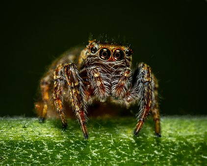 Spider, Arachnids, Paukoobraznoe, Bespozvonochnoe