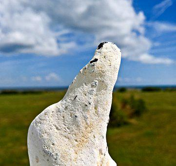 Stone, Polar Bear, Baltic Sea, White Stone
