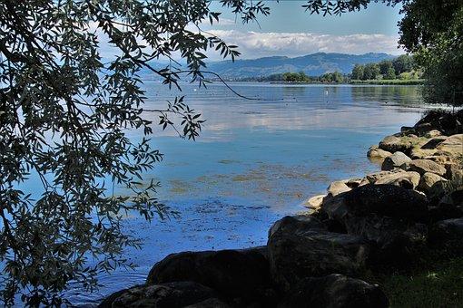 Lake, Bodensee, Beach, Scenery, Water, Nature