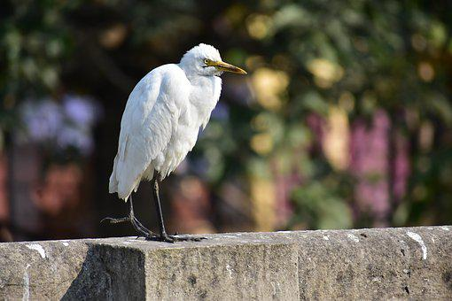 Bird, White Bird, Heron, Close Up, Forest, Focus