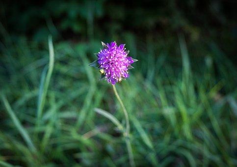 Flower, Bloom, Weed, Purple, Blossom, Bloom, Green