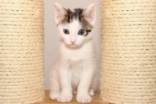 Cat, Small, Kitten, Pet, Cute, Young, Charming, Face