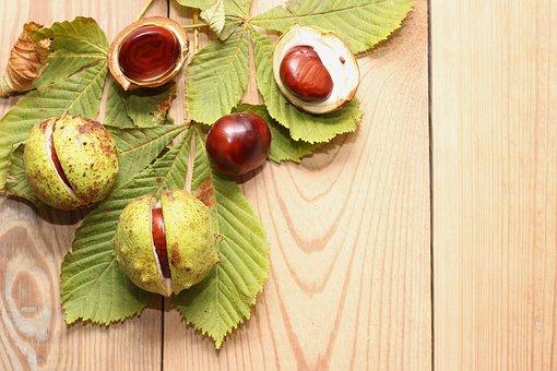 Autumn, Leaves, Chestnut, Shell, Fall Foliage, Nature