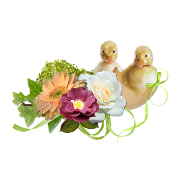 Spring, Easter, Cute, Ducklings, Chicks, Egg, Hatch