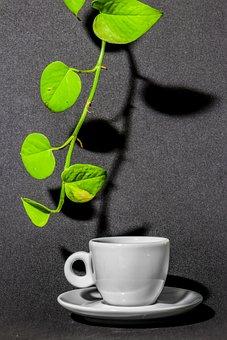 Coffee, Leaf, Green, Twig, Cupcake, Saucer, White