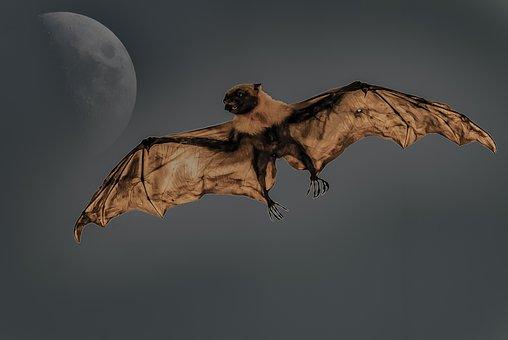 Bat, Giant, Mammals, Dogfish, Night, Moon