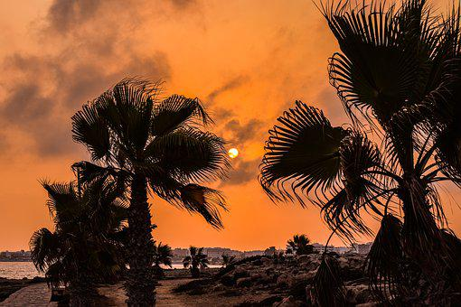 Palm Trees, Sunset, Sun, Sky, Clouds, Evening