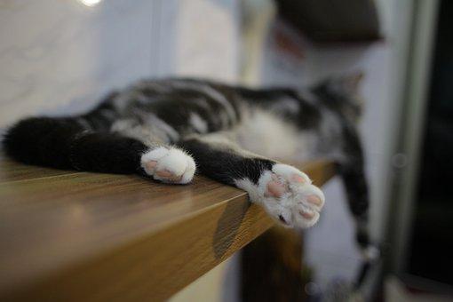 Cat, Foot, Pet, Cute, Sleep, Kitten