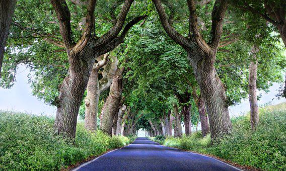 Avenue, Rügen, Trees, Road, Baltic Sea, Forest