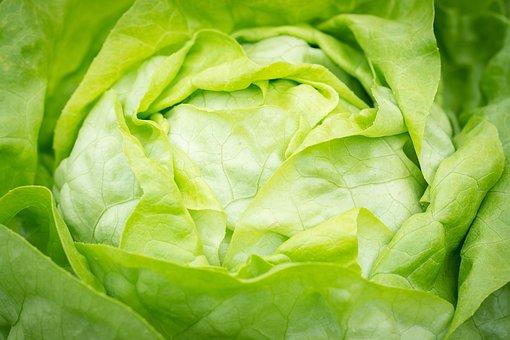 Salad, Lettuce, Head Of Lettuce, Häuptelsalat, Green