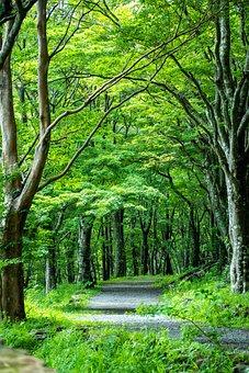 Green, Tree Lined, Road, Japan, Kanagawa Japan, Forest