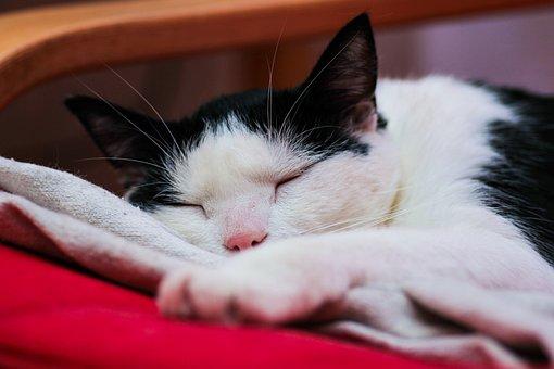 Cat, Dream, Sleeping, Rest, Kitten, Nice, Animal, Lazy