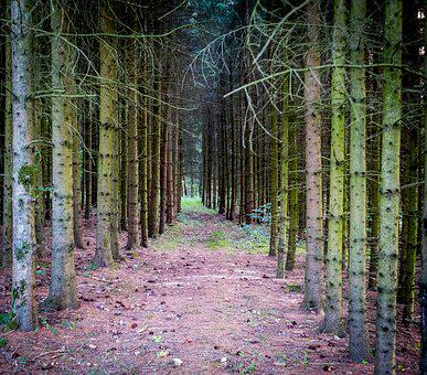 Forest, Away, Forest Path, Trees, Tree Trunks, Nature