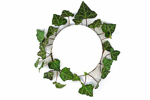 Frame, Green, Ornament, Design, Photo Frame
