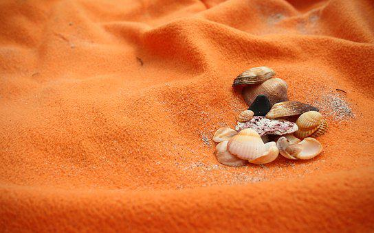 Sea, Seashells, Beach, Orange, Sand, Life, Shell
