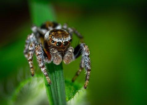 Spider, Arachnids, Bespozvonochnoe, Spider-racer, Macro