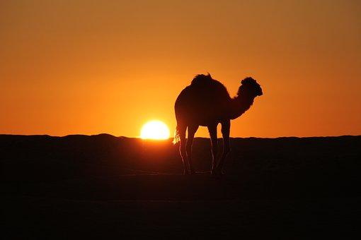 Tunisia, Desert, Camel, Sun Rise, Sun Set