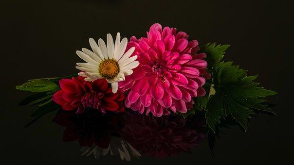 Flower Arrangement, Three Flowers, Pink, White, Dahlias