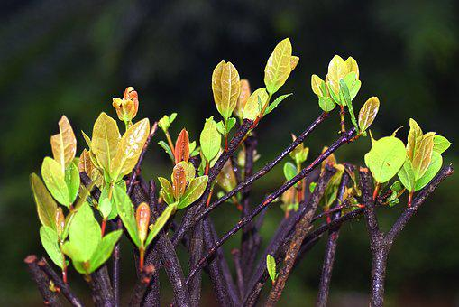 Leaf, Nature, Plant, Colorful, Green, Wood, Garden