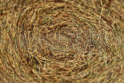 Harvest, Field, Agriculture, Landscape, Round Bales
