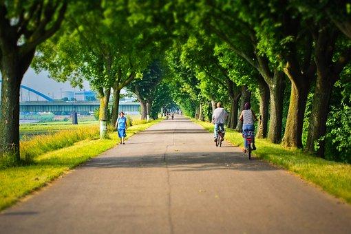Away, Avenue, Nature, Landscape, Trees, Light, Walk