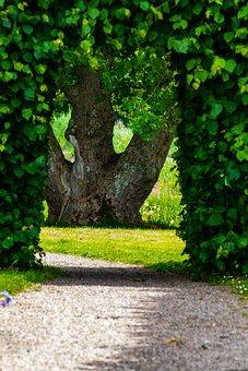 Green, Leaves, Tribe, Wood, Foliage, Bark
