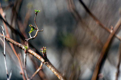 Nature, Branch, Branches, In The Spring, Beautiful
