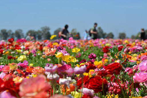 Color, Red, Colorful, Flowers, Yellow, Nature, Bright