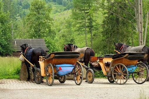 Horses, Dog Sledding, Carriages, Stop, Mountains