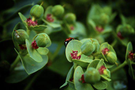 Lady Bug, Insect, Bug, Wildlife, Beetle, Entomology