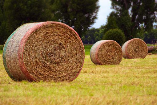 Harvest, Field, Agriculture, Landscape, Round Bales