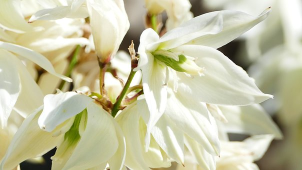 Landscape, Nature, Flowers, White, All In White, Sun