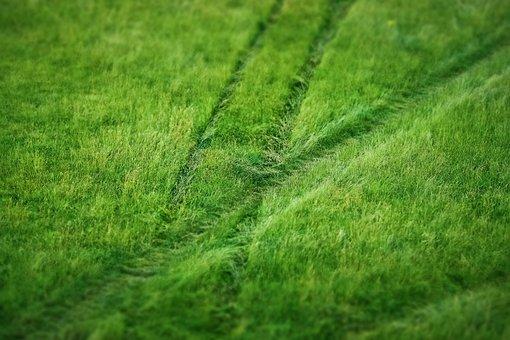 Grass, Meadow, Nature, Summer, Field, Plant, Green