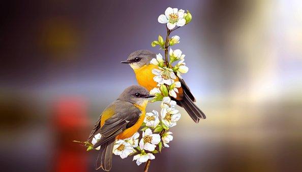 Two, Birds, Friendship, Pair, Couple, Animal, Nature