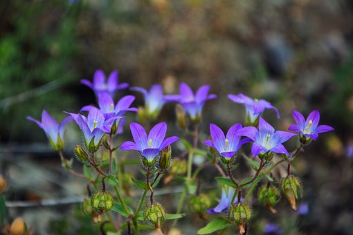 Wildflowers, The Bluebells, Spring, Nature, Flora