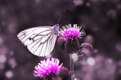 Butterfly, Away, Animal, Landscape, Small, Out