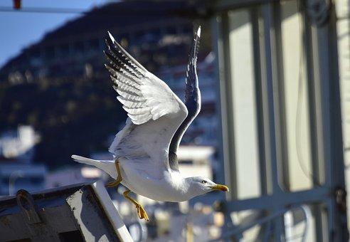 Seagull, Birds, Seabirds