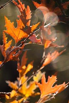 Autumn, Color, Nature, Yellow, Beautiful, Season, Leaf