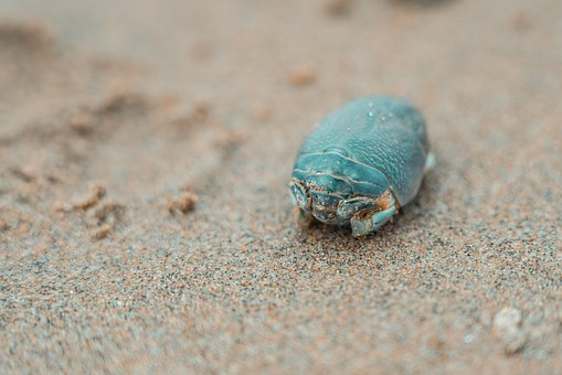 Beach, Shell, Sand, Sea, Summer, Water, Coast, Nature