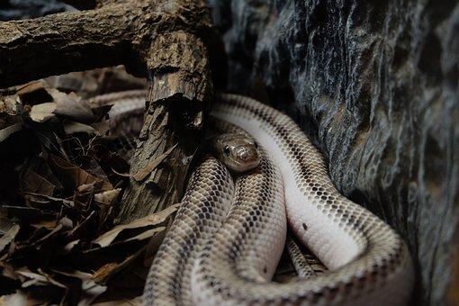 Snake, White Snake, Wild Animals, Life In The Jungle