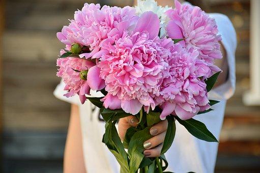 Summer, Peonies, Pink, Flowers