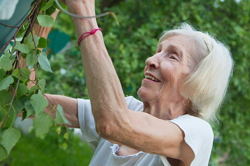 The Old Lady, Grandma, Garden, Apple Tree, Harvest