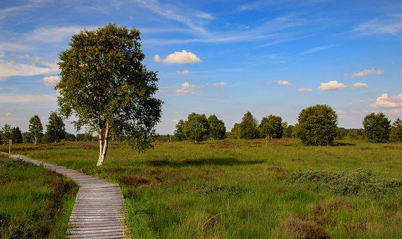 Venn, High Fens, Belgium, Landscape, Moor