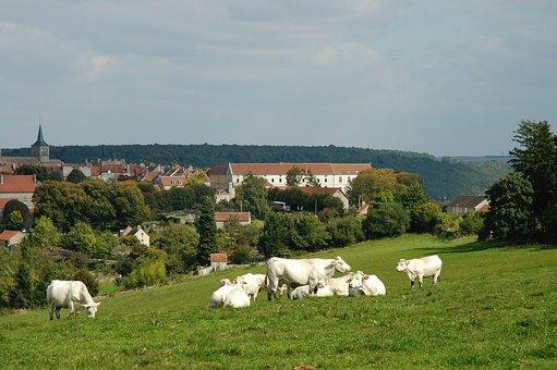 Cow Pasture, Cows, Landscape, Burgundy, Village