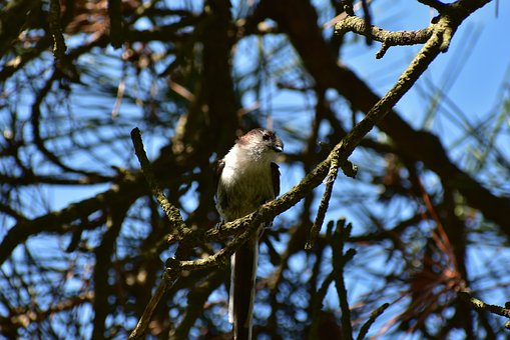 Animal, Forest, Wood, Bird, Wild Birds, Energy Guide
