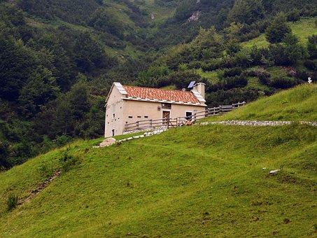 Alm, Trail, Hiking, Mountain, Walk, Veneto, Italy