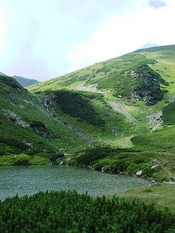 Tarn, Mountains, Cathy R Mountains, Water, Törpefenyves